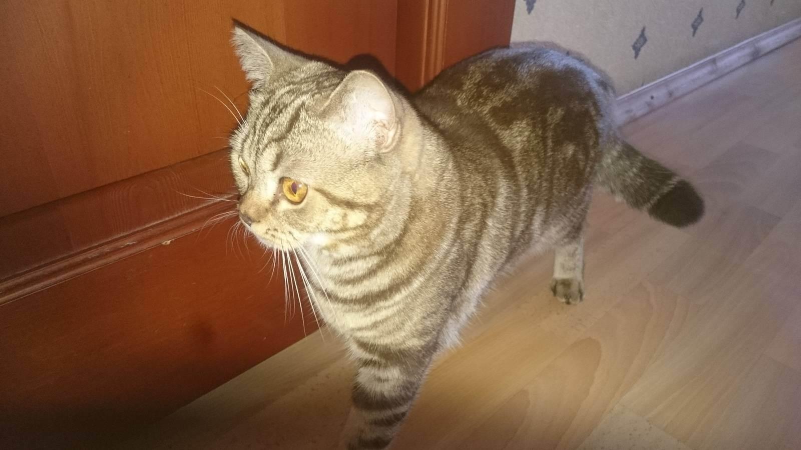 Как приучить кошку к новому дому?