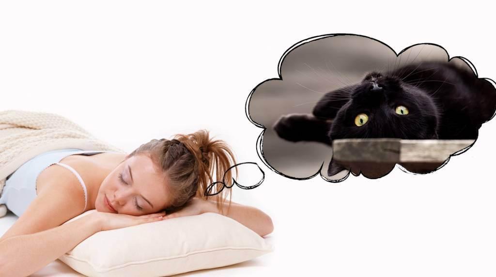 Сонник кошки спят на мне. к чему снится кошки спят на мне видеть во сне - сонник дома солнца