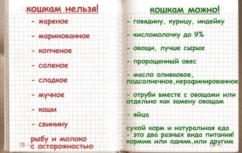 ᐉ чем кормить котенка если у него понос: рисовый отвар для кошки - zoomanji.ru