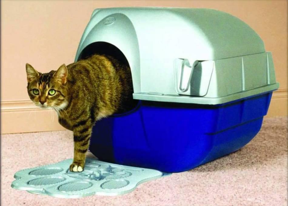 Какой наполнитель для кошачьего туалета лучше когда много кошек
