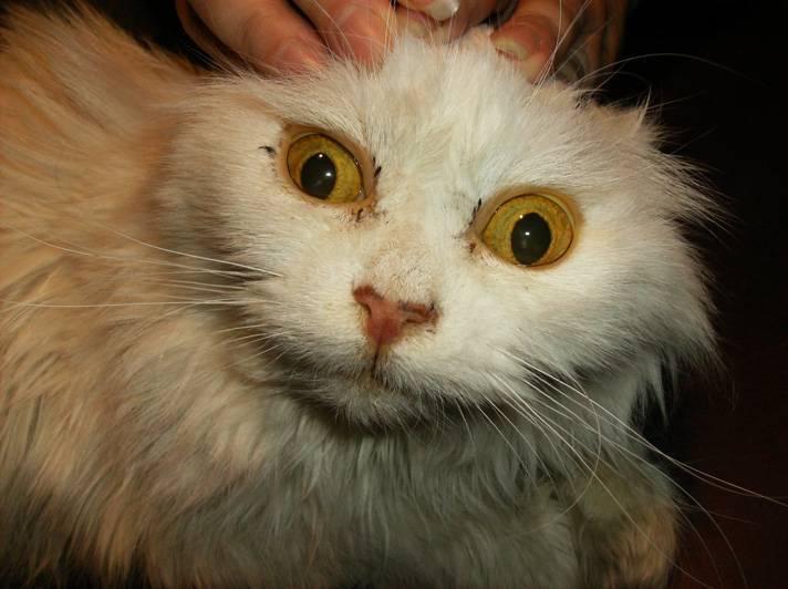 Сальмонеллезы у кошек - симптомы инфекционных болезней: рвота и понос.