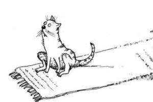 Почему кошка ездит на попе