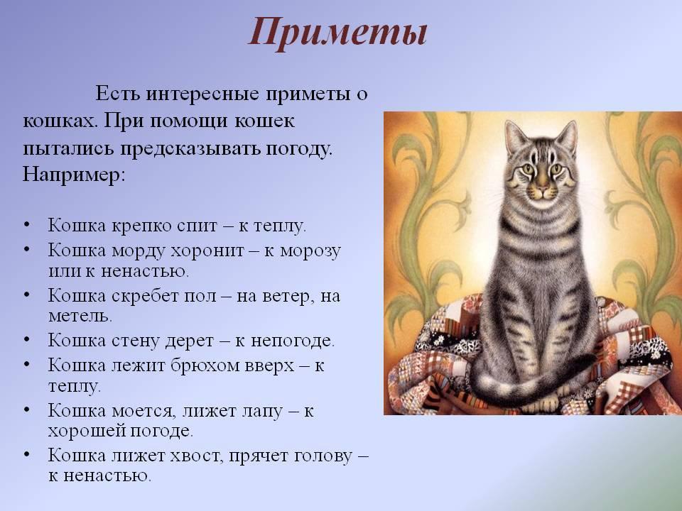 Примета когда кот ушел из дома – значение, варианты толкований