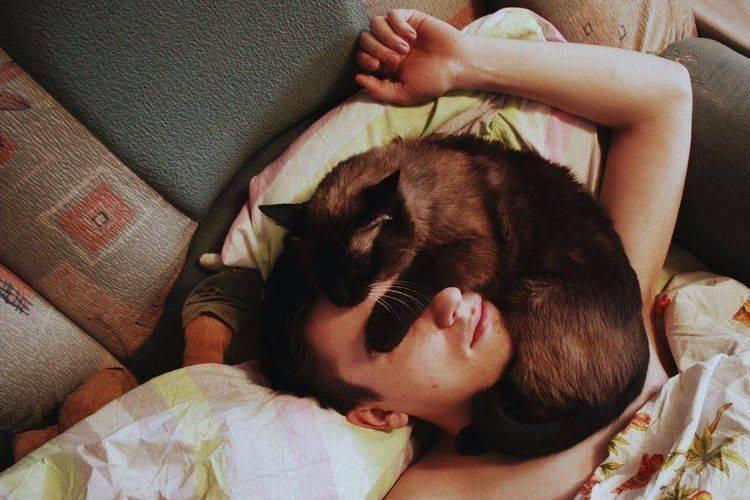 Почему кошки спят на человеке, ложатся на грудную клетку, на живот беременной женщины?