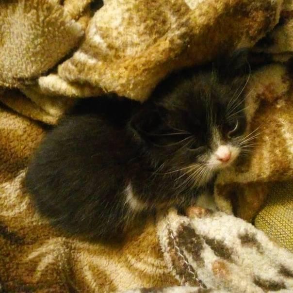Кошки: всё о содержании, уходе и здоровье кошек