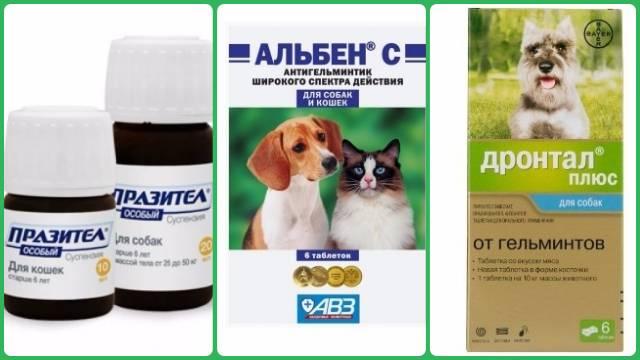 Дегельминтизация кошек — зачем нужна обработка от глистов