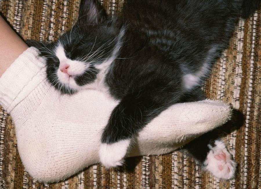 Почему кошки трутся о ноги хозяев