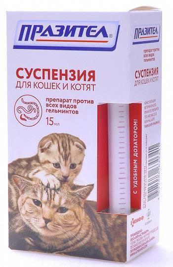 Как правильно лечить глисты у кошек? курс лечения - твой питомец