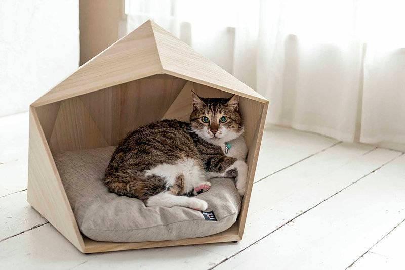 Как приучить кошку к лежанке: как выбрать, куда поставить