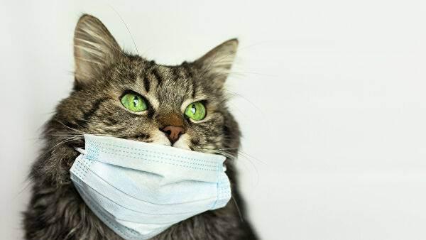 Вопрос дня: могут ли домашние животные заразиться коронавирусом covid-19 или заразить человека