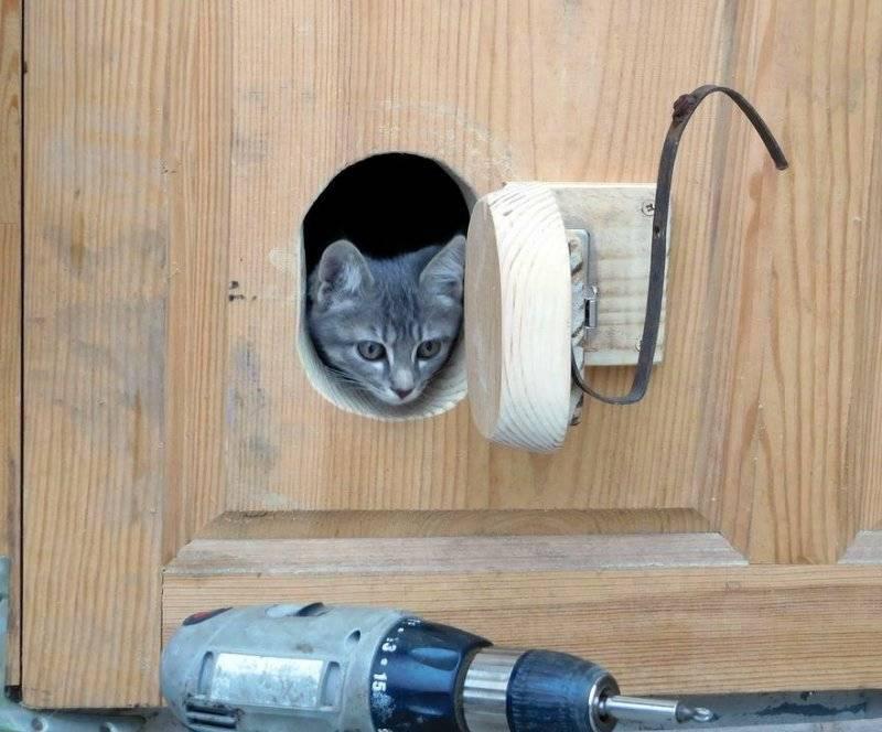Дверь для кошек в дверь: как сделать проход, виды