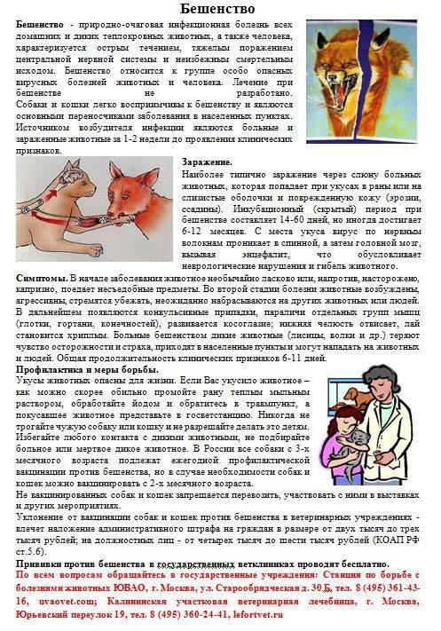 Укусы котов лечение в домашних условиях