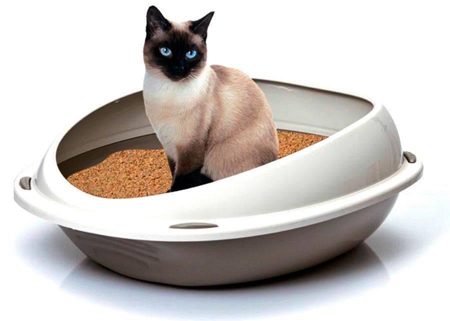 Лоток с высокими бортиками для кошек: выбираем большой кошачий туалет с высокими бортами. особенности лотков с сеткой для кота