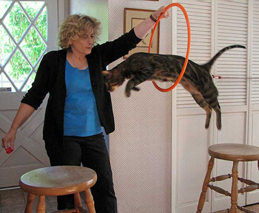 Как дрессировать кота и когда нужно начинать, основные команды