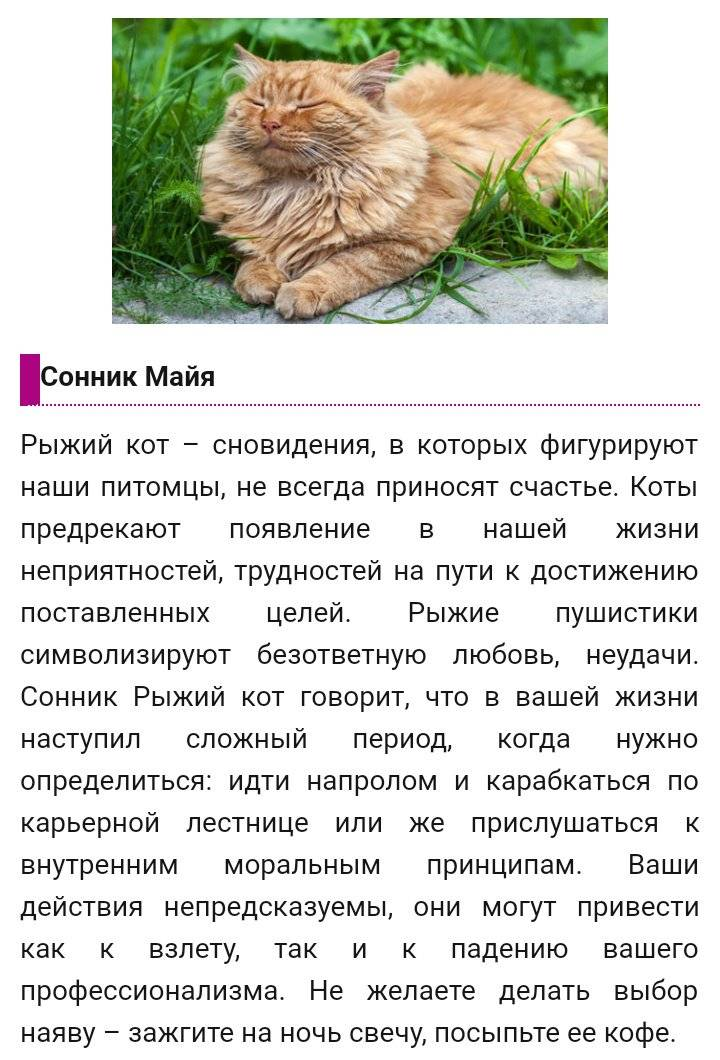 Сонник гладить котят. к чему снится гладить котят видеть во сне - сонник дома солнца