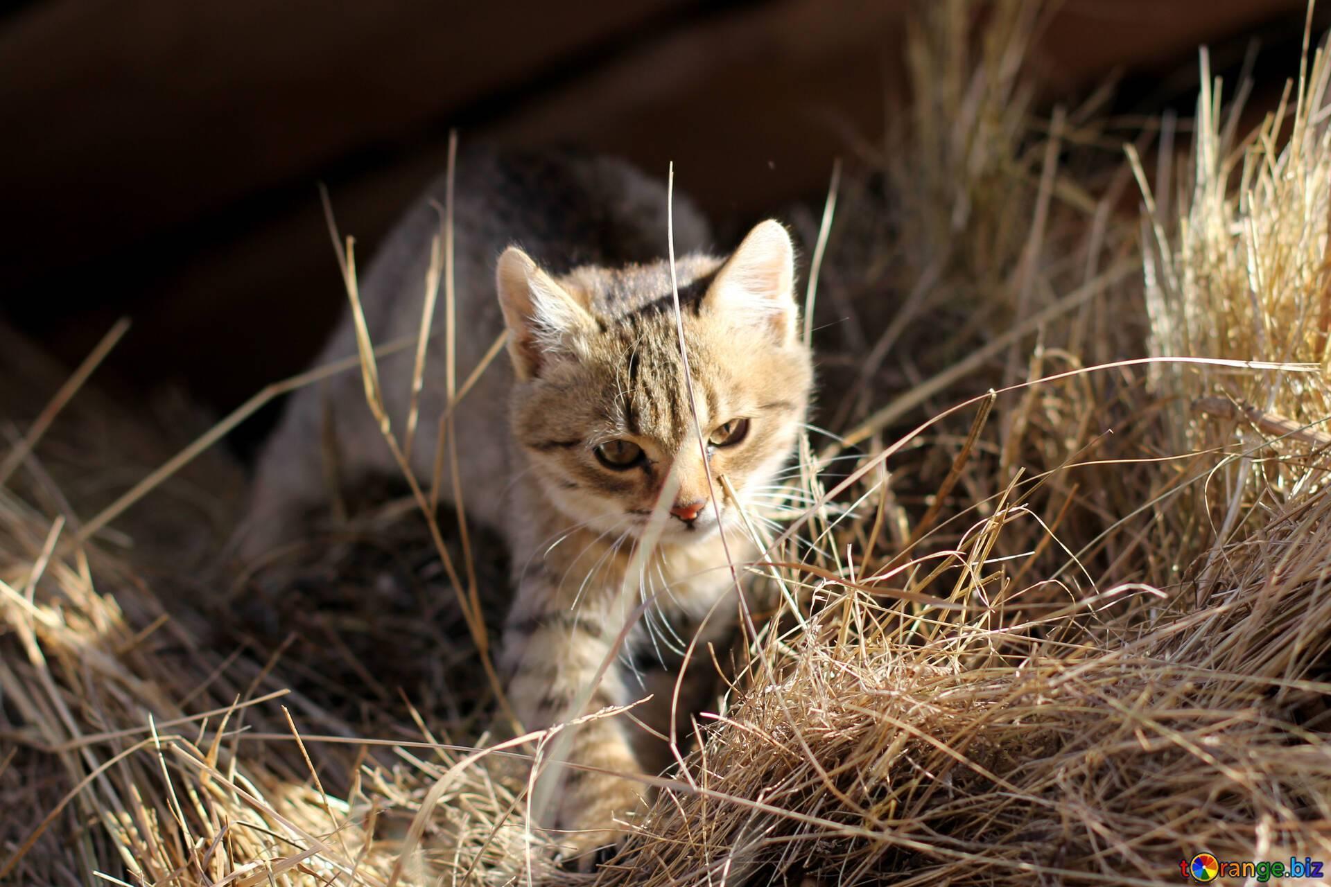 Кошки-крысоловы или крысы-каннибалы: как избавиться от грызунов в магадане