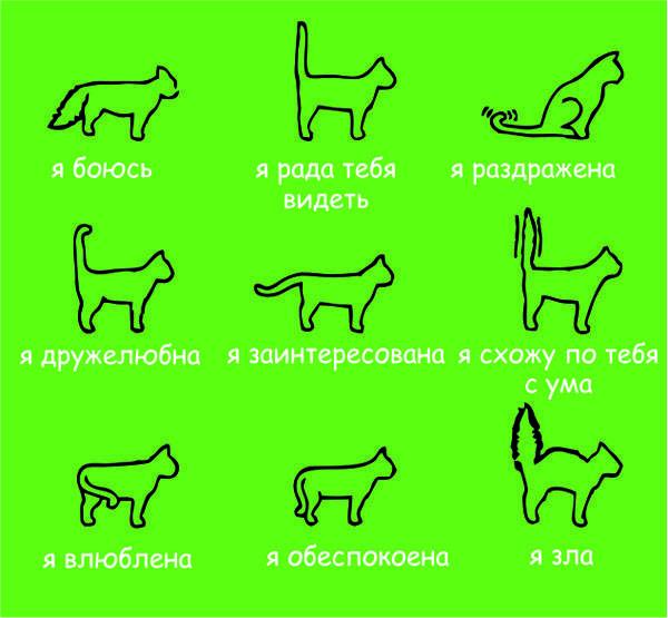 Кошачий язык: разговорник, как общаются коты между собой