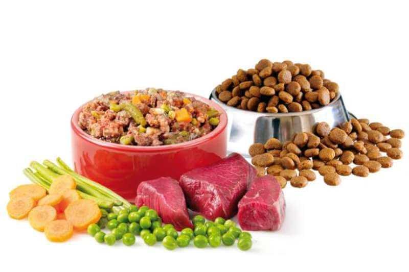 Сухой корм для кошек: вред или польза