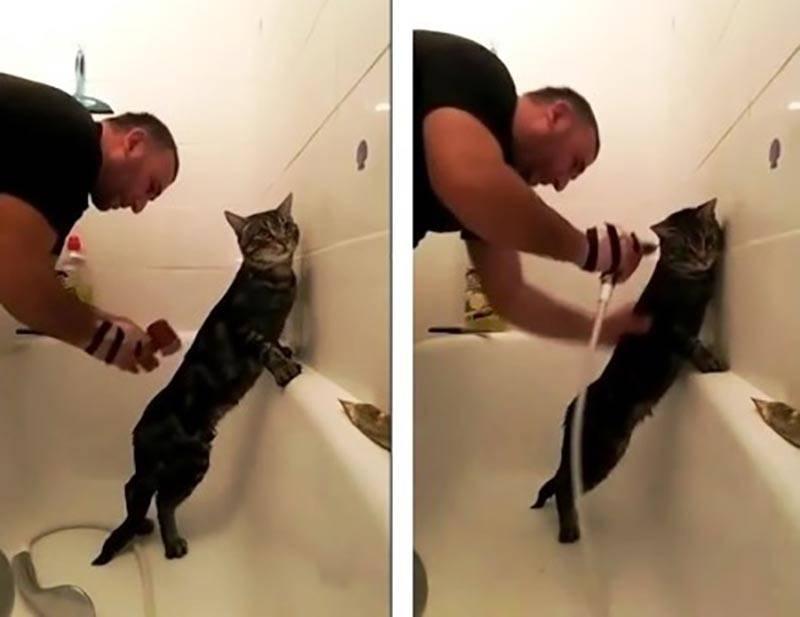 Кот пукает: когда нормальное явление становится проблемой, что делать