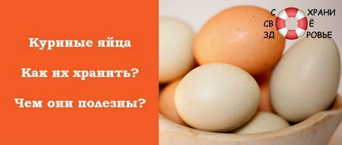 Можно ли давать коту сырое яйцо?
