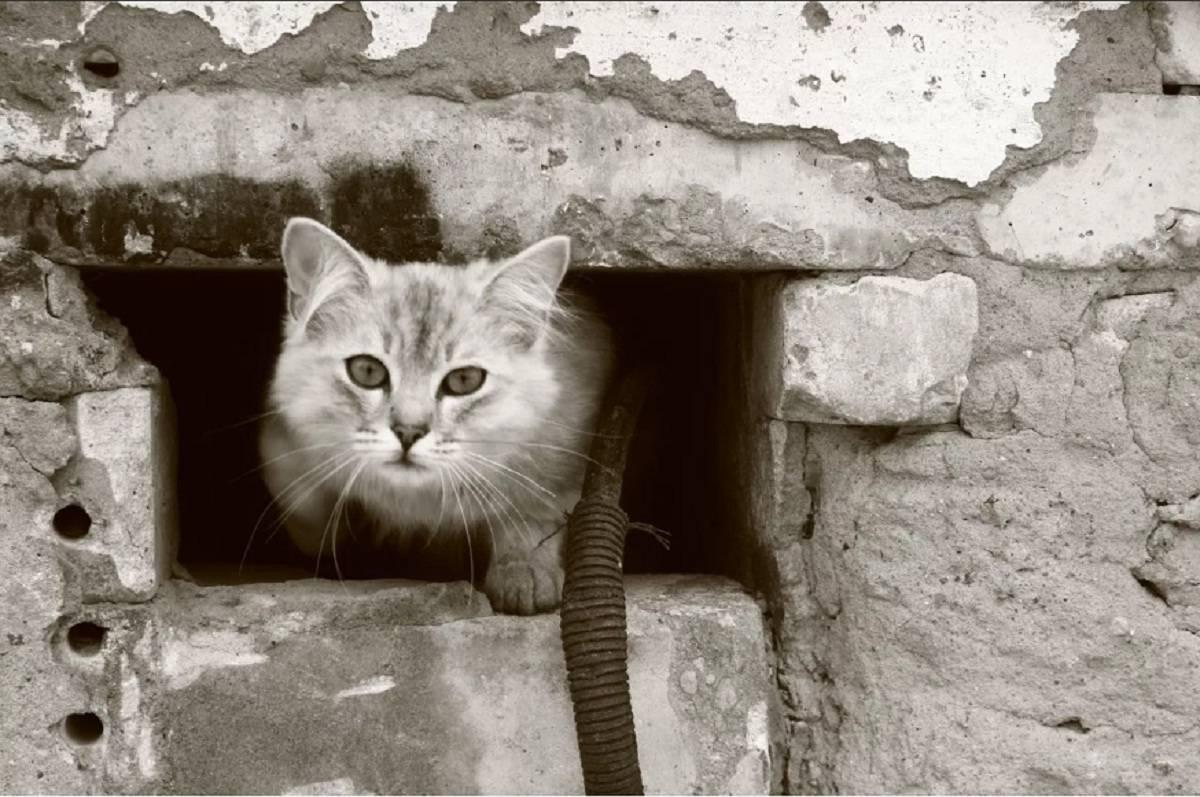 Как найти кота, если он потерялся на улице или спрятался в квартире, не отзывается и всего боится?