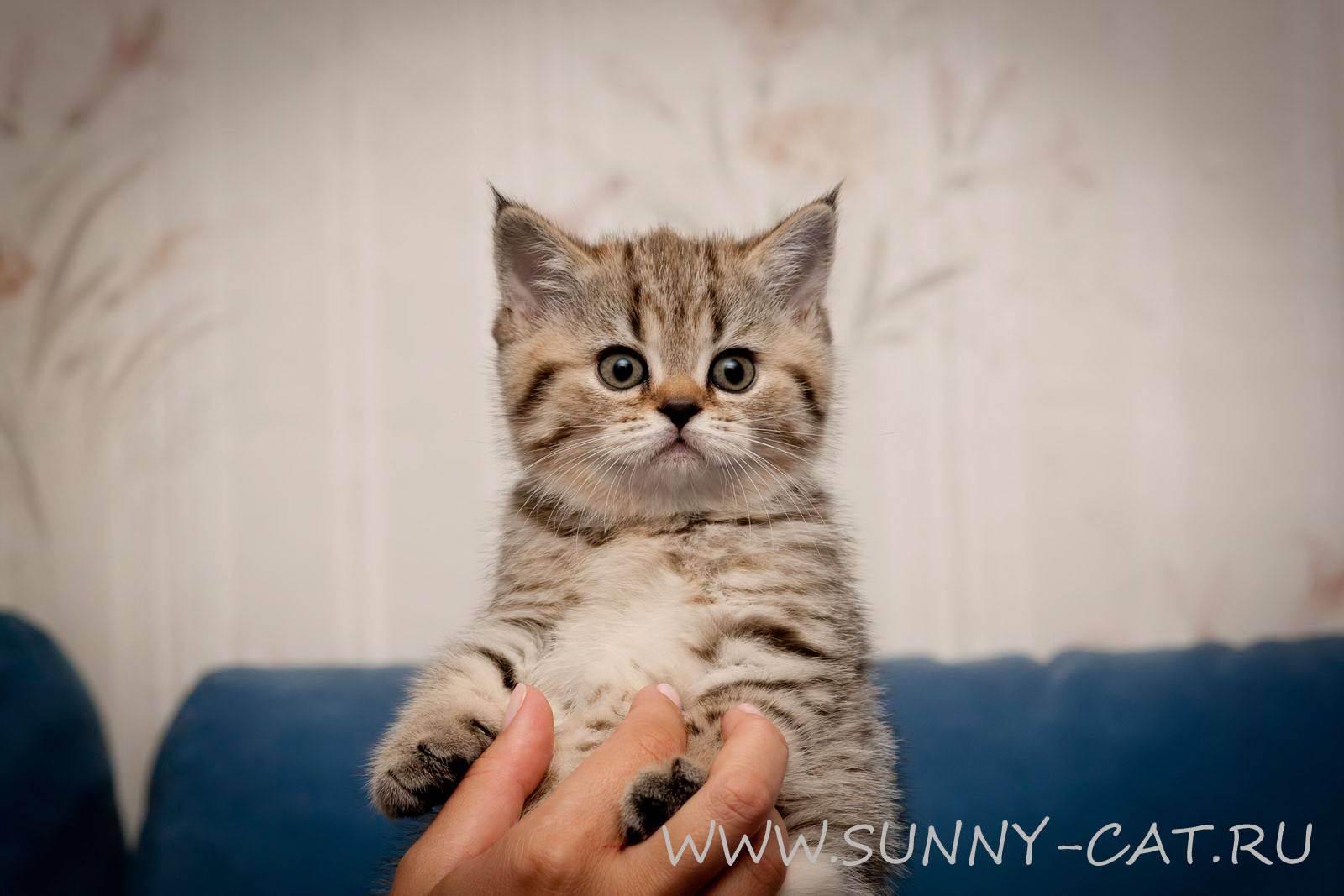 Как приучить котенка пить воду?