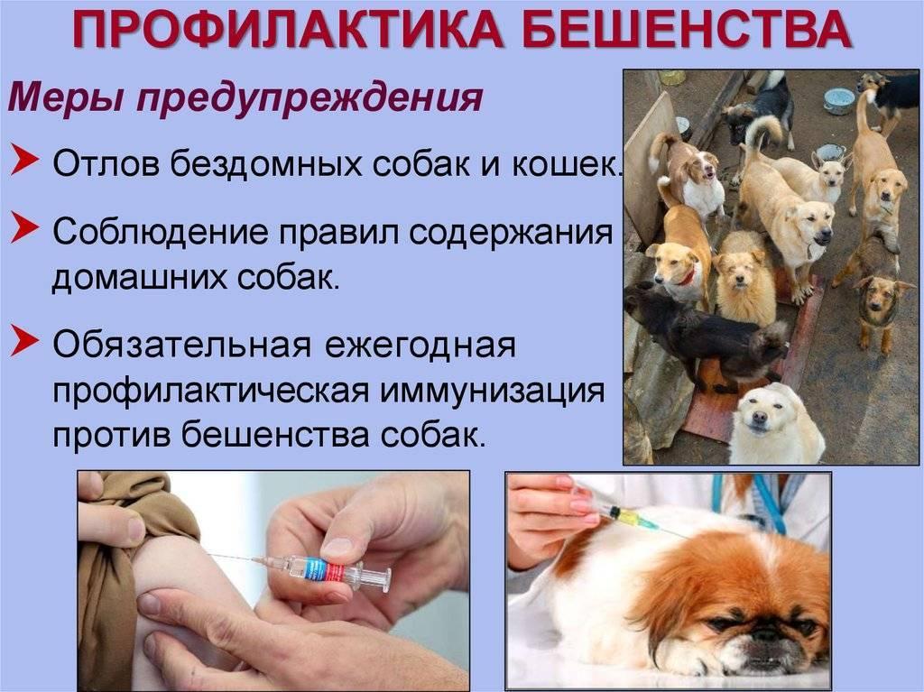 Вакцинация кота от бешенства: единственная возможность защиты