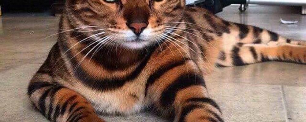 Влияние кошек на здоровье человека. позитивное влияние кошек: 5 интересных фактов