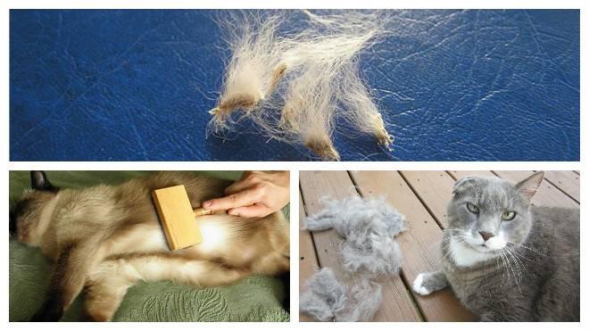 Почему у кошки выпадает шерсть клоками?