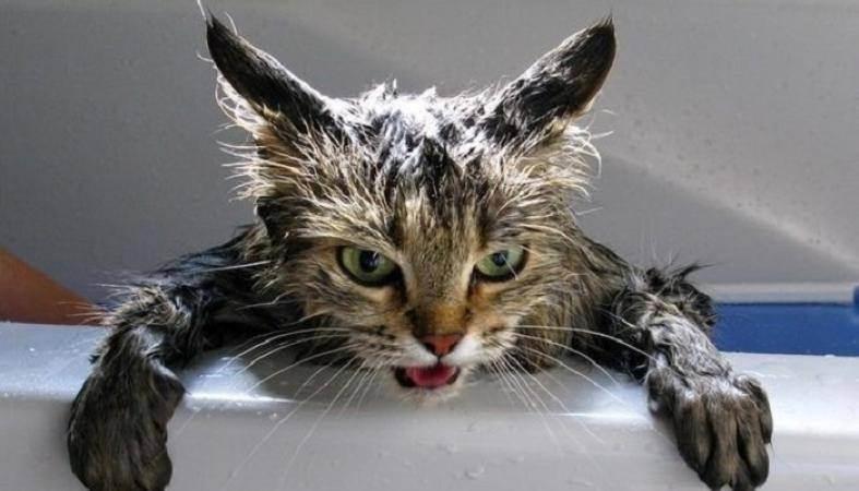 Как помыть кота, который боится воды и царапается