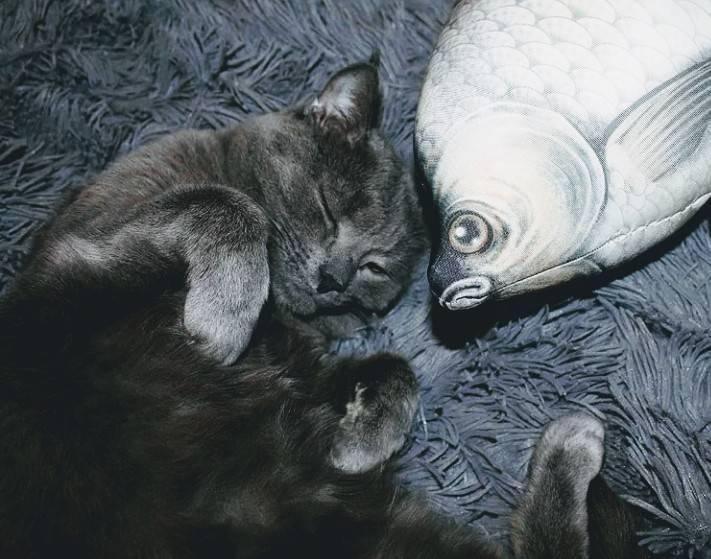 Снятся ли кошкам и котам сны