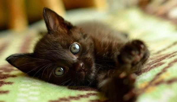 Оригинальные клички для таинственных черных котят