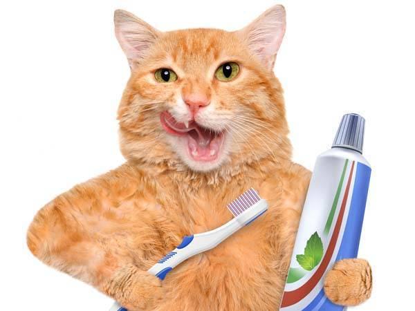 Неприятный запах изо рта у кошки – основные причины и способы решения проблемы.