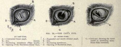 Разбираем как устроен глаз у животных. вспомогательный аппарат.заболевания.