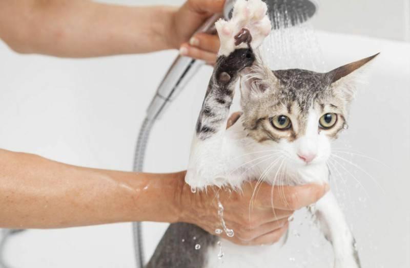 Первое купание котёнка: как правильно провести процедуру