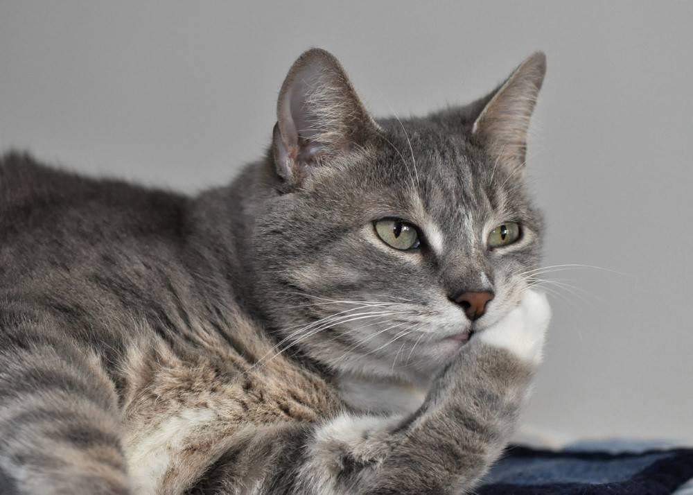 Узнают ли кошки своих хозяев после разлуки?