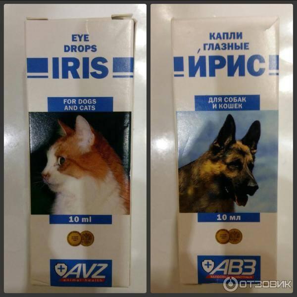 Глазные капли ирис для собак и щенков: инструкция по применению с аналогами, показаниями и рекомендациями ветеринаров