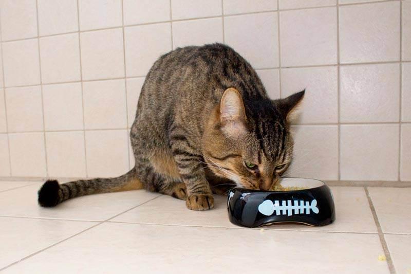 Можно ли кошке давать сырое мясо