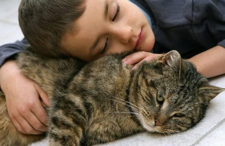 Как кошки лечат болезни: фелинотерапия — колесо жизни
