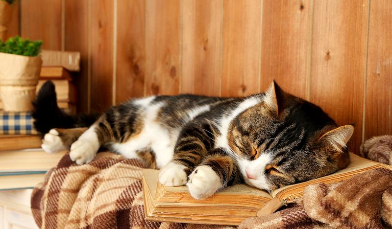 К чему снятся кошки и котята женщине по соннику