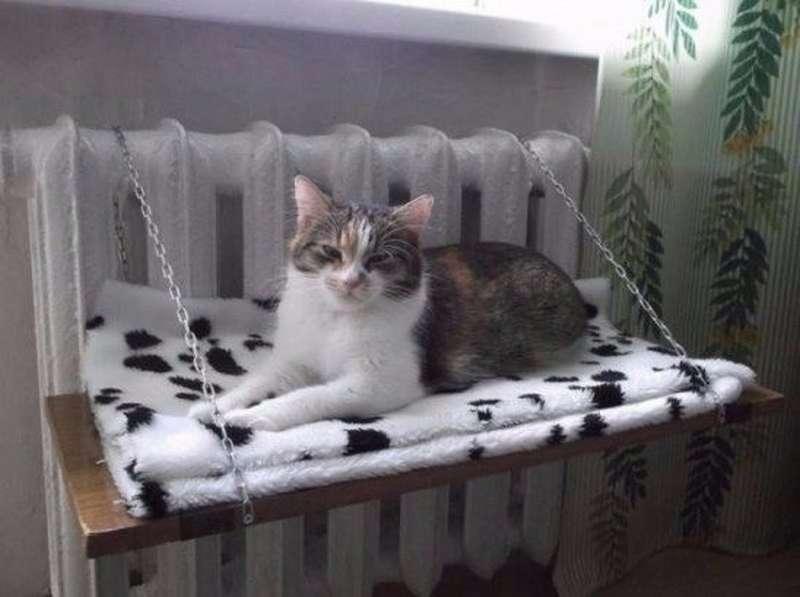 Гамак для кошки на батарею своими руками: материалы и инструменты, как сделать кошачий домик на радиаторе