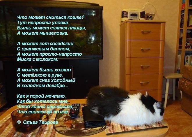 К чему снится кошка. видеть во сне кошка - сонник дома солнца