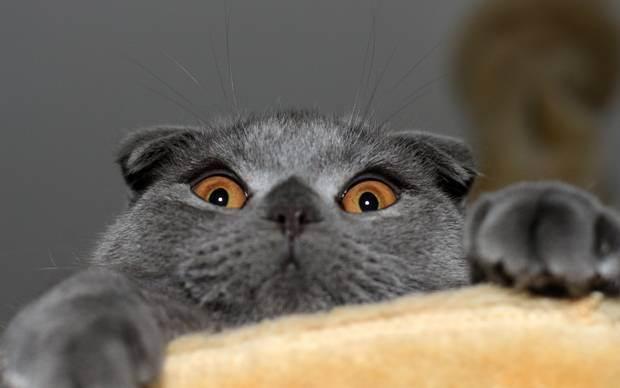 Про усыпление... - можно ли усыпить здоровую кошку - запись пользователя ..даниэль.. (daniellagytenko) в дневнике - babyblog.ru
