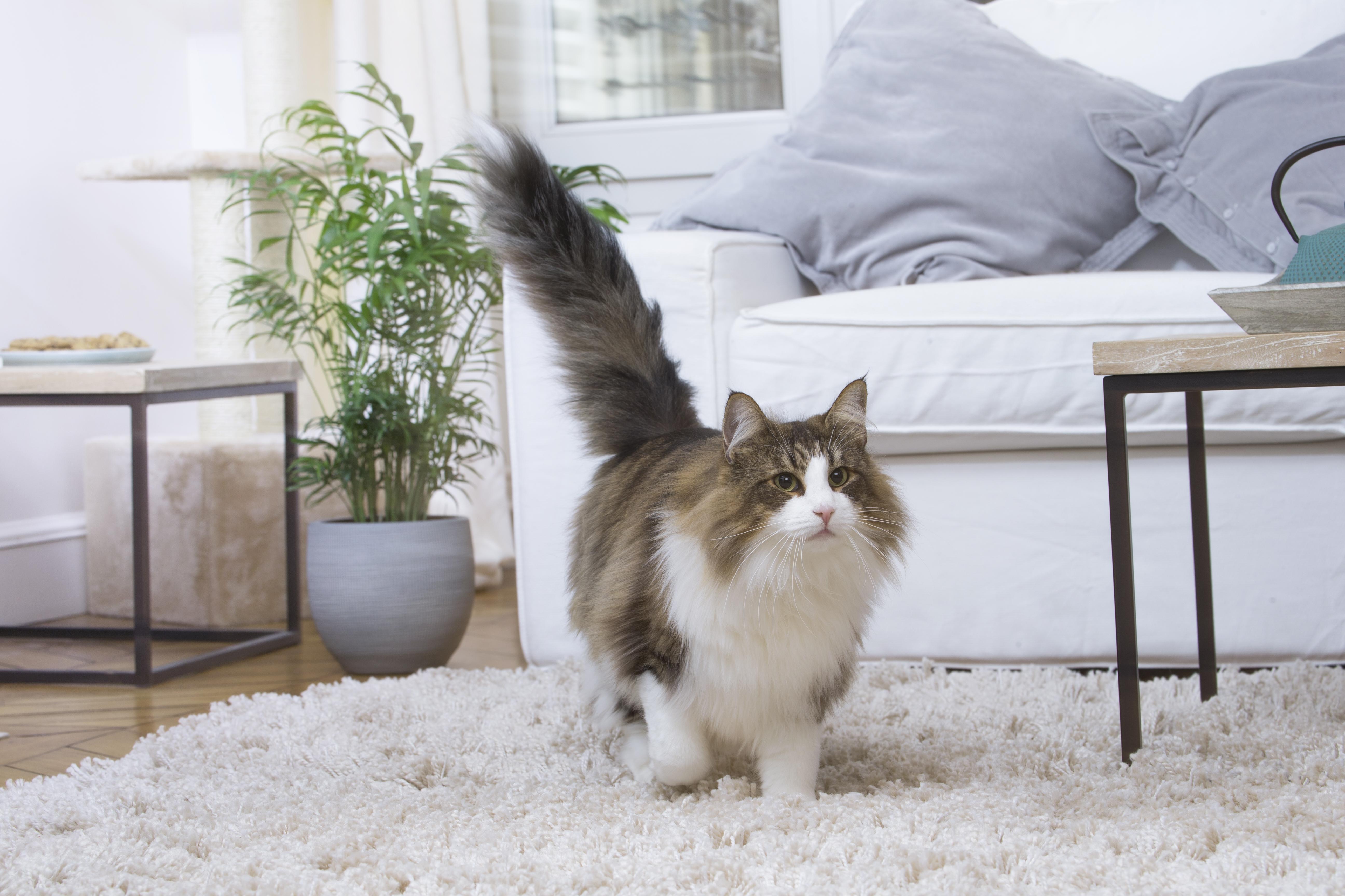 Вредные привычки кошек и как с ними бороться - домашний любимец