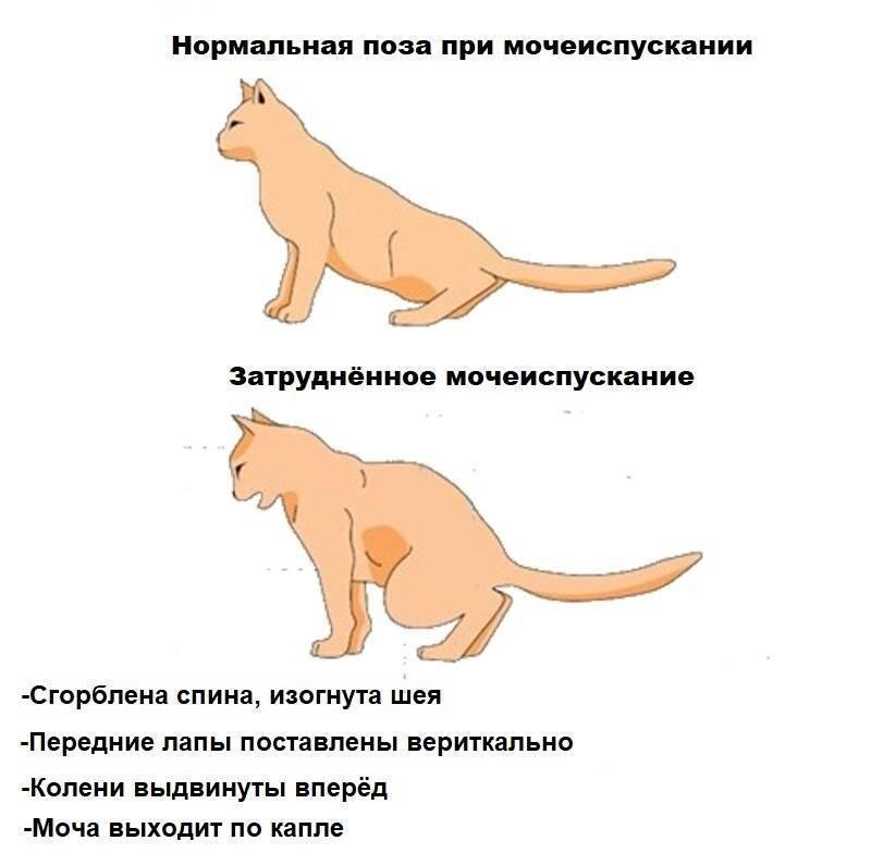 Зачем кошке хвост? каково значение хвоста для кошки?