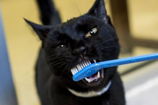 Как почистить зубы кошке?