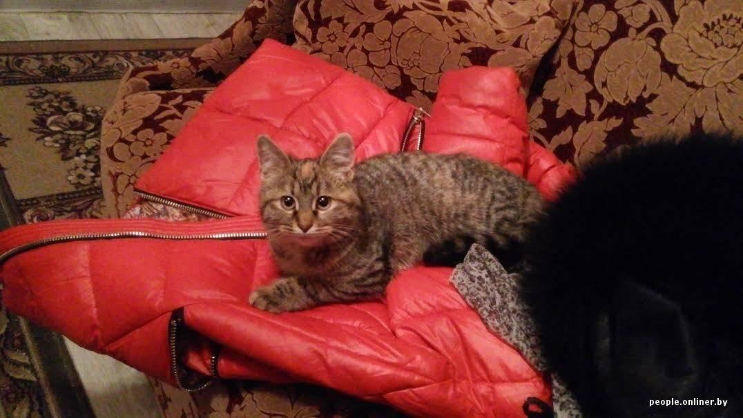 Без документов. кошки