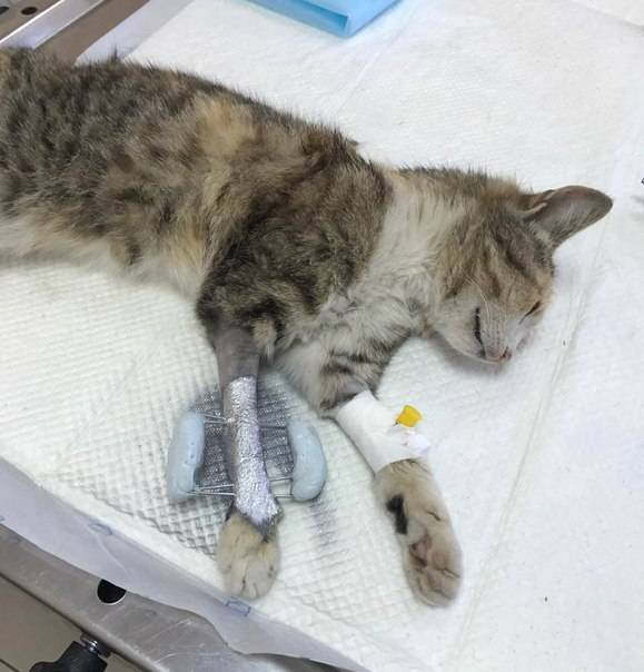 Первая помощь при травмах у кошек. обезболивающие для кошек