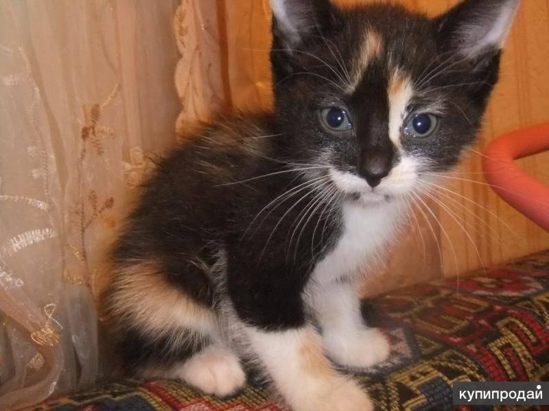 Как назвать котенка рыжего цвета
