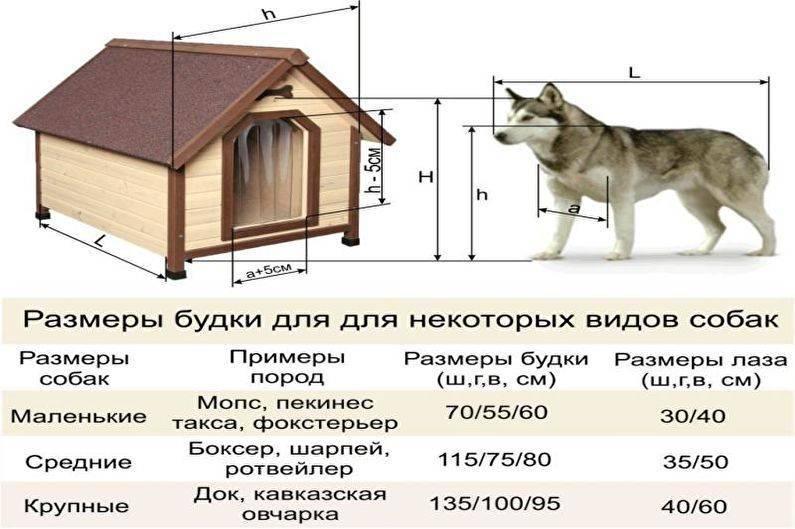Пошаговая инструкция по изготовлению вольера для собак собственноручно